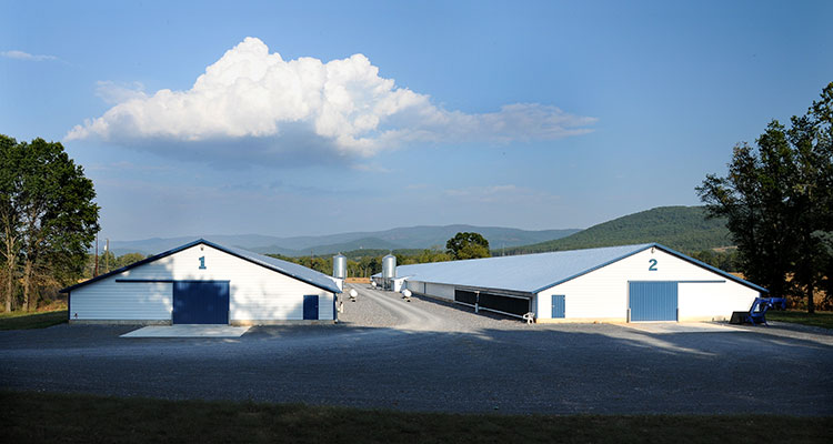 Image of Chicken Barns
